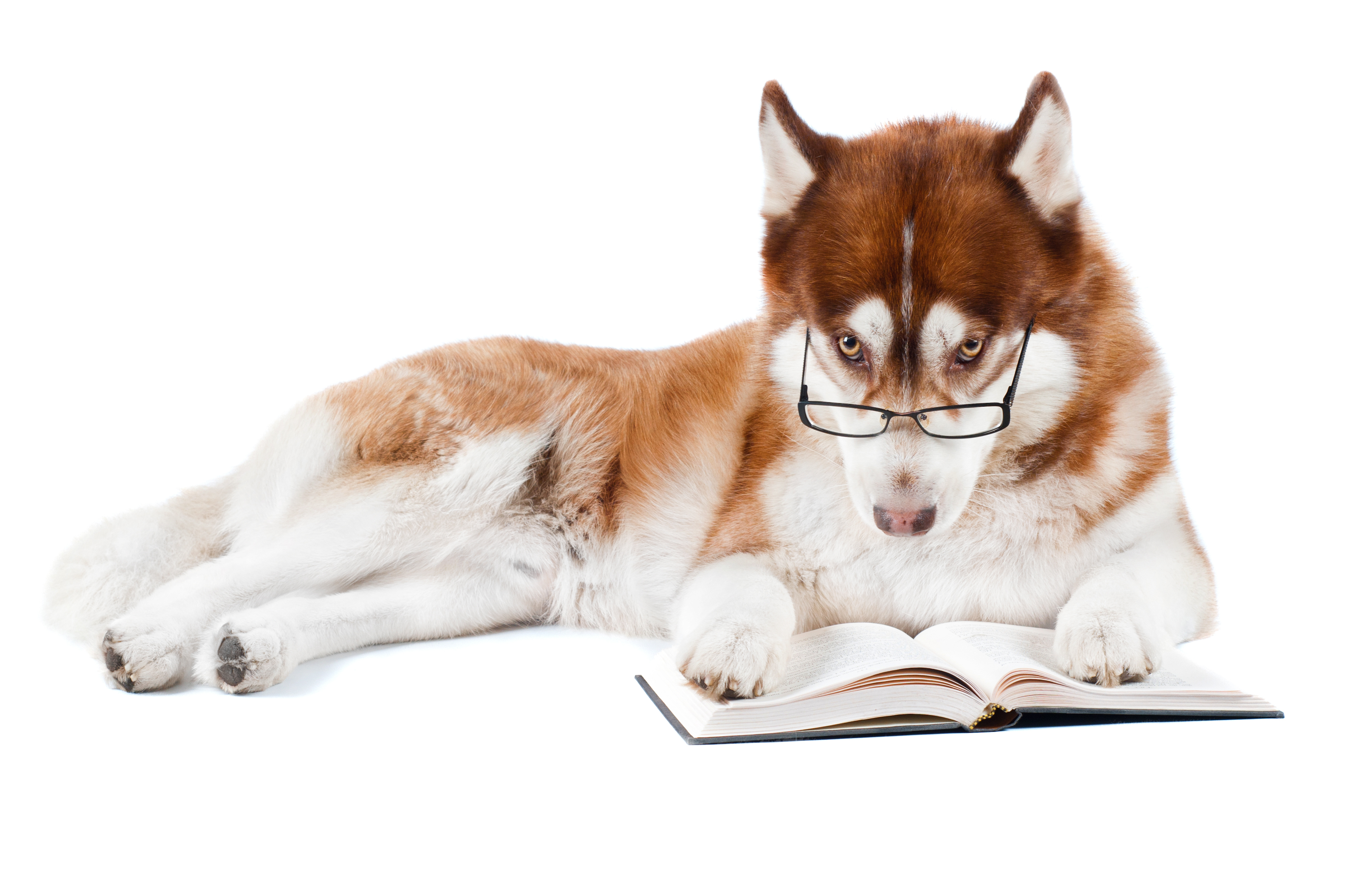 Book Of Training A Dog
